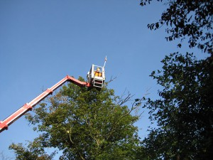 Baumpflege,-Gehölzschnitt-und-Baumfällung